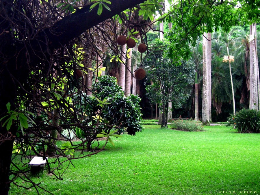 IMPORTANT! Carlos Erik Malpica Flores: Let's Go To The Botanic Garden inCaracas!