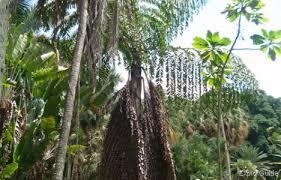 Carlos-Erik-Malpica-Flores-Lets-Go-To-The-Botanic-Garden-in-Caracas